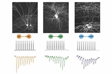 Clever Suppression in the Brain | Neuroscience | Scoop.it