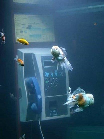 Des vieilles cabines téléphoniques transformées en de magnifiques aquariums | Piwee | recyclage créatif | Scoop.it