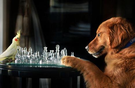 Teen Girl Shoots Beautiful and Creative Portraits of Her Pet Dogs | Tween Girls | Scoop.it