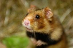 Zones prioritaires pour la biodiversité : le décret en consultation | Environnement | Scoop.it
