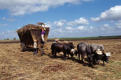 Agriculture   Cuba, Josh Crouch   Scoop.it