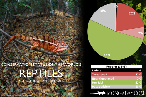 The world's most endangered reptiles | Life on Earth | Scoop.it