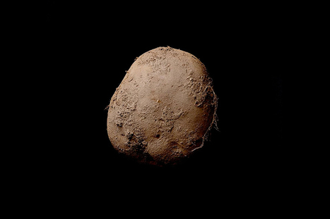 Une des photographies les plus chères du monde représente une patate! | La photographie | Scoop.it