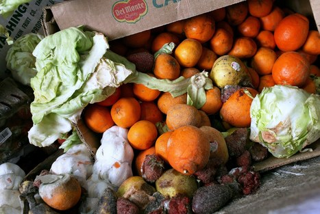 Tackling Food Waste as a Way to Save the Climate, Too | Zero Waste Europe | Scoop.it