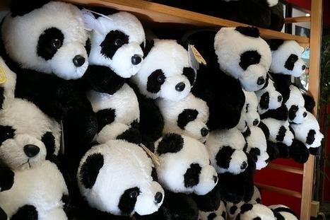 Comment éviter de se faire pénaliser par Google Panda ? | Contenus éditoriaux | Scoop.it
