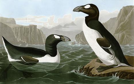 Arctic Animals Lost to Extinction - Keep Me Warm | Oceans and Wildlife | Scoop.it