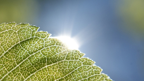 Photosynthesis photographed for the first time | Science, Technology, and Current Futurism | Scoop.it