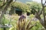 A Shetland garden which triumphed against the odds   Shetland Islands   Scoop.it