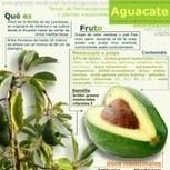 Principios activos del aguacate - Farmacognosia. Plantas medicinales | Aguacate: Persea  americana | Scoop.it