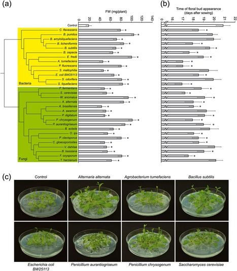 Volatile compounds emitted by diverse phytopathogenic microorganisms promote plant growth and flowering through cytokinin action | Microbiome and plant immunity | Scoop.it