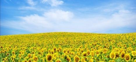 Pourquoi un Printemps de l'optimisme ? | Le best of des tendances et actualités de la communication et du marketing | Scoop.it