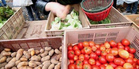 Les Amap réinventent le consommer local | Des 4 coins du monde | Scoop.it