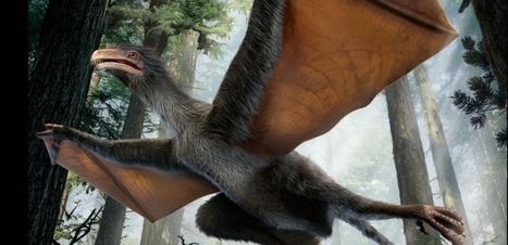 Un dinosaure aux ailes de chauves-souris   Merveilles - Marvels   Scoop.it