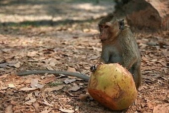 Beware of Monkey Traps - Christian Stories | Christian Stories and Testimonies | Scoop.it