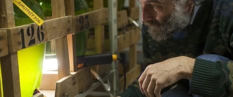 Dossier INRA - Au cœur du vin : les levures. | Verres de Contact | Scoop.it