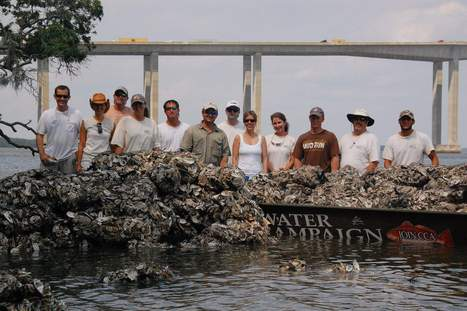 Recycling oyster shells improves fishing and water quality - Charleston Post Courier | Fish Habitat | Scoop.it
