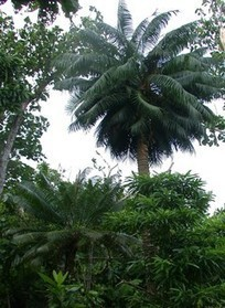 Trees' Diminished Resistance to Tropical Cyclone Winds Attributed to Insect Invasions | #TreeNews | Scoop.it