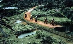 Elephant Caravan in Laos sparks conservation debate | Conservation | Scoop.it
