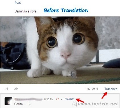 Google Translate For Google+ Allow You To Translate Individual Updates | The Google+ Project | Scoop.it