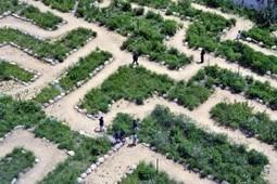 Navigating the altmetrics maze | Euroscientist Blog | Altmetrics | Scoop.it