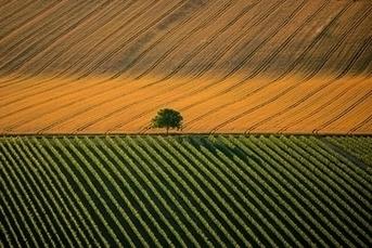 La faim des terres | GoodPlanet.info | Nourrir la planète... autrement | Scoop.it
