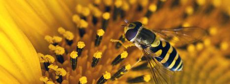 La production végétale française dépendant de l'action des pollinisateurs atteindrait 5 milliards | Nous avons besoin des abeilles | Scoop.it