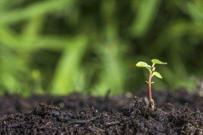 Agronutrition obtient sa première AMM sur le marché français des biofertilisants | AGROCHAINES | Scoop.it