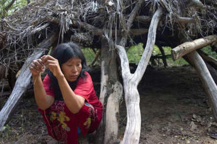 Le Paraguay autorise la destruction d'une réserve de biosphère de l'Unesco | Survival International | Kiosque du monde : Amériques | Scoop.it