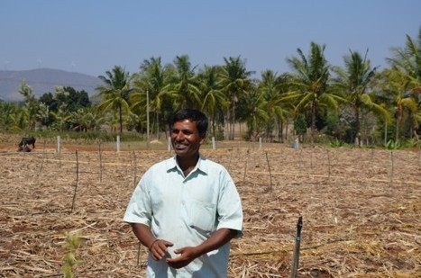 Bhoo chetana : mega initiative en Inde pour booster l'agriculture par la micronutrition du sol | Economie Responsable et Consommation Collaborative | Scoop.it