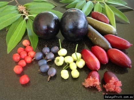 Secret Ingredients: Native Foods for a Warmer Australia | Australian Plants on the Web | Scoop.it