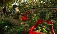India's wine dreams evaporate | Wine in the World | Scoop.it