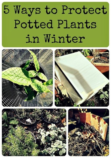 5 Ways to Protect Potted Plants in Winter | From The Herb Cottage | Scoop.it