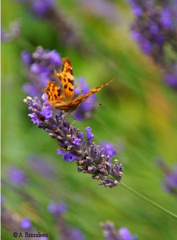 Les fiches pratiques de PROPAGE, l'observatoire des papillons pour les gestionnaires d'espaces | Insect Archive | Scoop.it