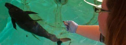 Actualité > De l'œuf à l'adulte, le thon en aquaculture, est-ce pour ... | CHEOUR B | Scoop.it