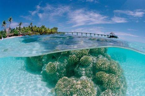 Les coraux polynésiens résistent | Aquariophilie | Scoop.it