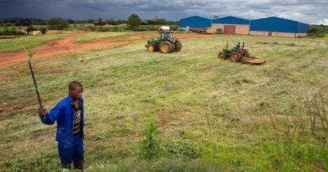 COP 22 : l'agriculture africaine peut relever le défi environnemental | Chimie verte et agroécologie | Scoop.it