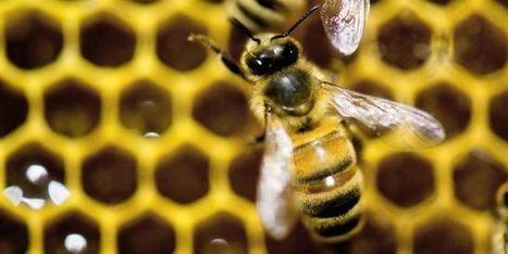 Les députés votent l'interdiction des pesticides tueurs d'abeilles dès 2018   EntomoNews   Scoop.it