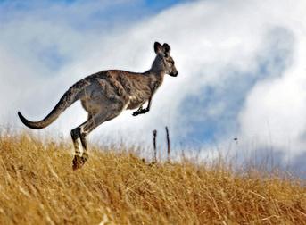 Cheap flights to Australia | Airsavings | Scoop.it