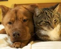 Is The Arrival of a New Baby Harder on Dogs or Cats? | Family Pets | Scoop.it