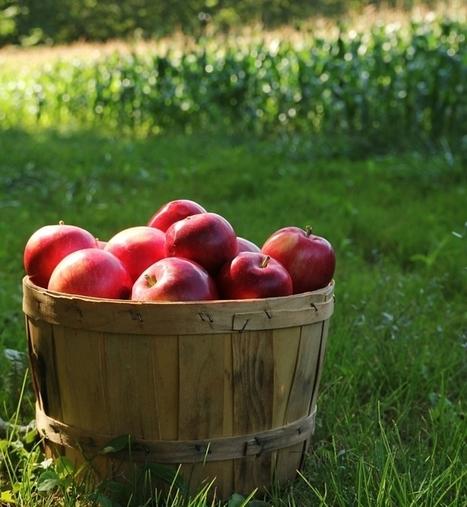 Fall Garden Checklist | Gardening | Scoop.it