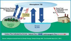 Scientists discover giant carbon sink in deep ocean | The Palestinian Space Agency - وكالة الفضاء الفلسطينية | Scoop.it