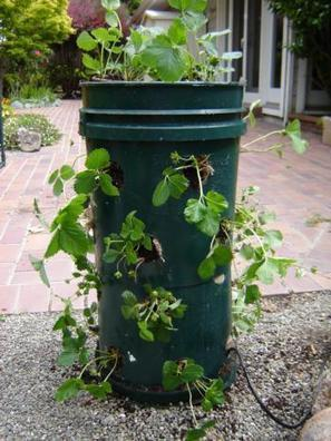 How to build a strawberry tower   Gardening Life   Scoop.it