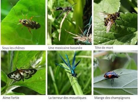 Les formations de l'OPIE / Le quiz des insectes | Mon Scoop.it du week-end | Scoop.it