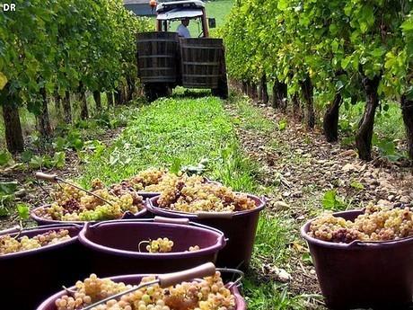 Le Jurançon vignoble du Béarn | In Vino Veritas | Tourisme Sud-Ouest | Aquitaine OnLine | BIENVENUE EN AQUITAINE | Scoop.it