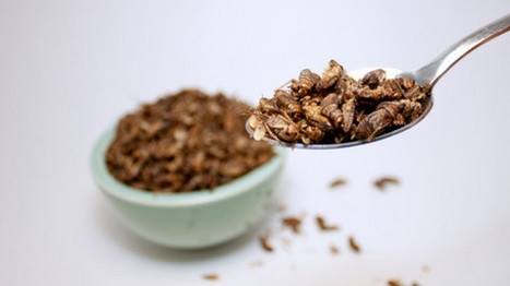 EFSA on insects: Pathogens harmful to humans most likely from farming   UsagesBSF   Scoop.it