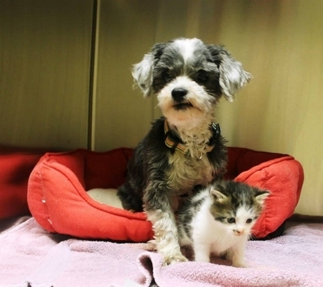 Dog Finds A Tiny Kitten, Risks Everything To Save Her | Feline Health and News - manhattancats.com | Scoop.it