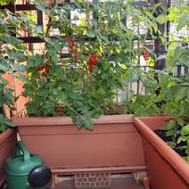 Potager en ville : des légumes sur le balcon ! | agriculture urbaine | Scoop.it
