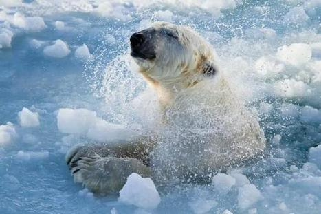 """#NatureGalleries:  """"No where to land"""" !  ~ #Wildlife #habitat loss 