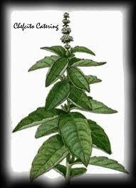 """Ocimum basilicum : Albahaca """" Dietetica """"   ECOLOGIA Y SALUD: Plantas aromáticas y medicinales.   Scoop.it"""