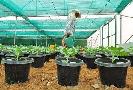 #Monsanto fordert von #WHO Rücknahme einer kritischen #Roundup-Studie #science #wirtschaft | Messenger for mother Earth | Scoop.it